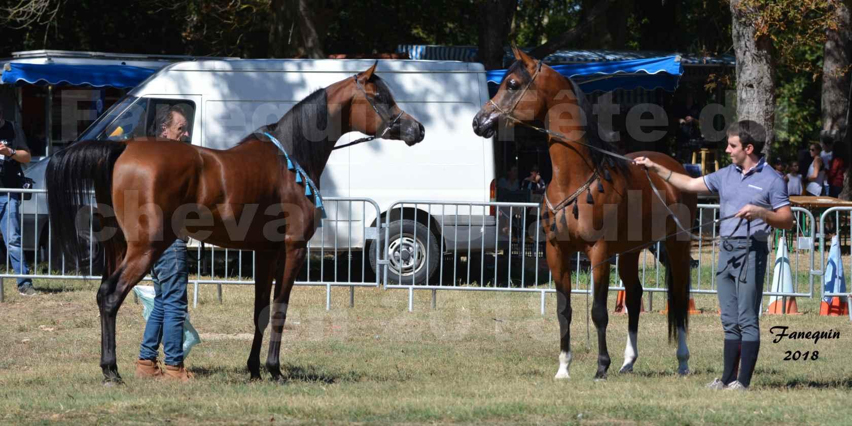 Fête du cheval à GRAULHET le 16 septembre 2018 - Présentation de chevaux Arabe Elevage de GACIA - 01