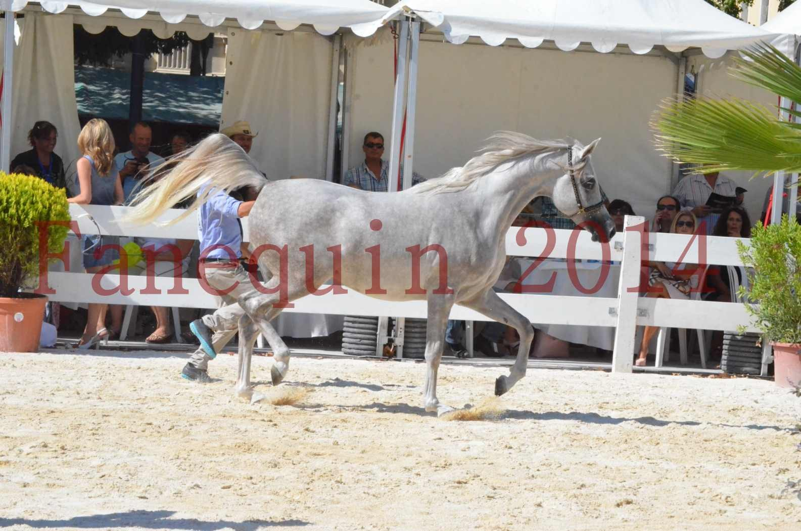 Concours national de Nîmes 2014 - Championnat Femelles Juniors - VOLODIA DE LAFON - 05
