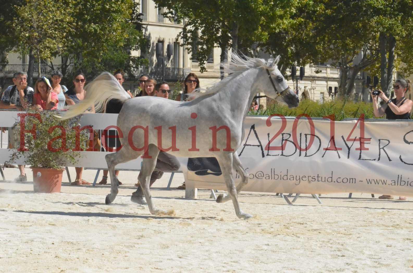 Concours national de Nîmes 2014 - Sélection  - VOLODIA DE LAFON - 11