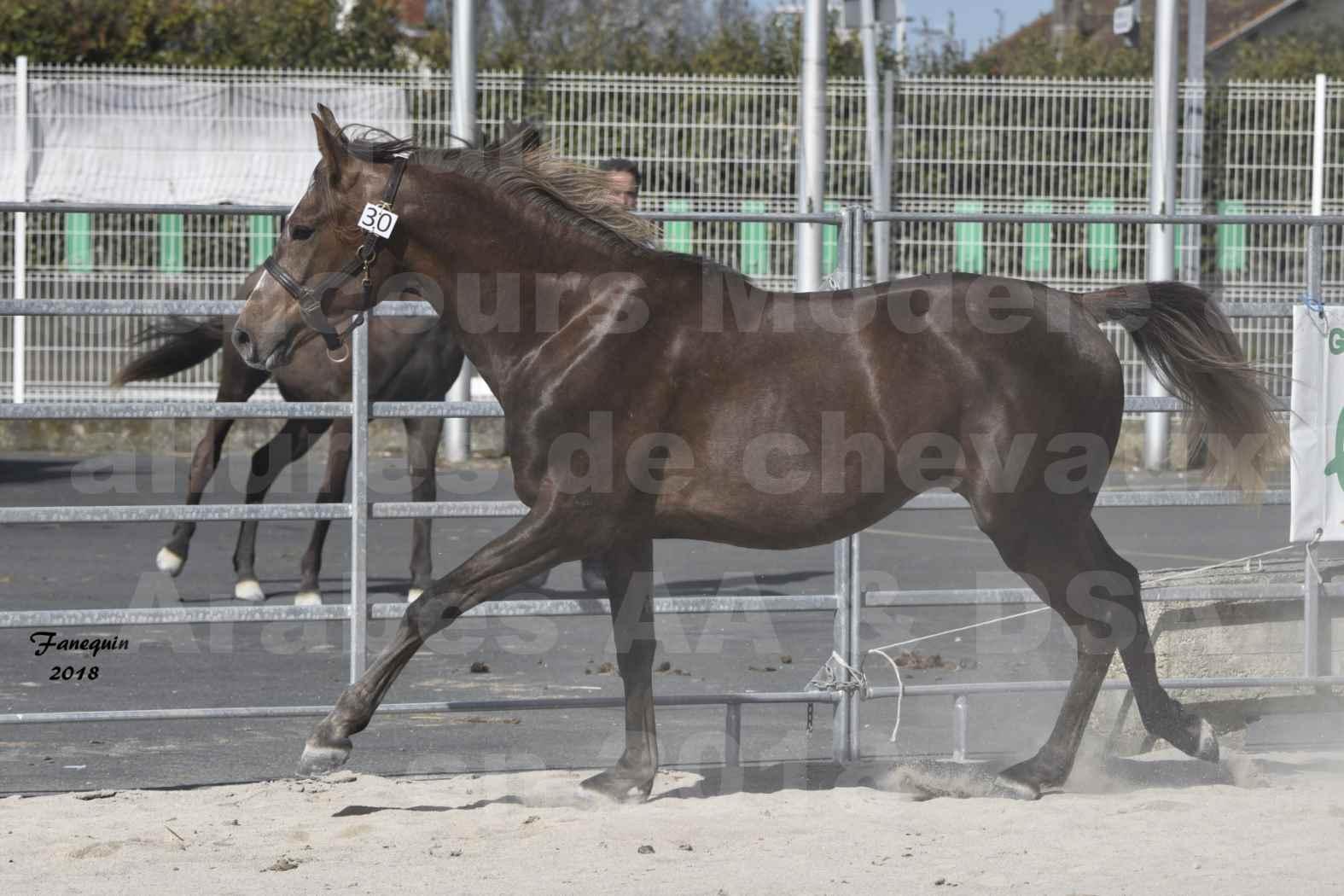 Concours d'élevage de Chevaux Arabes - D S A - A A - ALBI les 6 & 7 Avril 2018 - DJAHM AL MOUNJOYE - Notre Sélection - 3