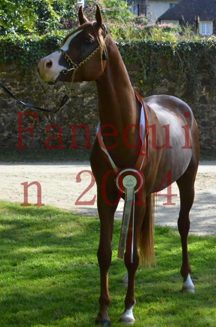 Championnat de FRANCE 2014 - Amateurs - SELECTO IBN SAMAWI - 178