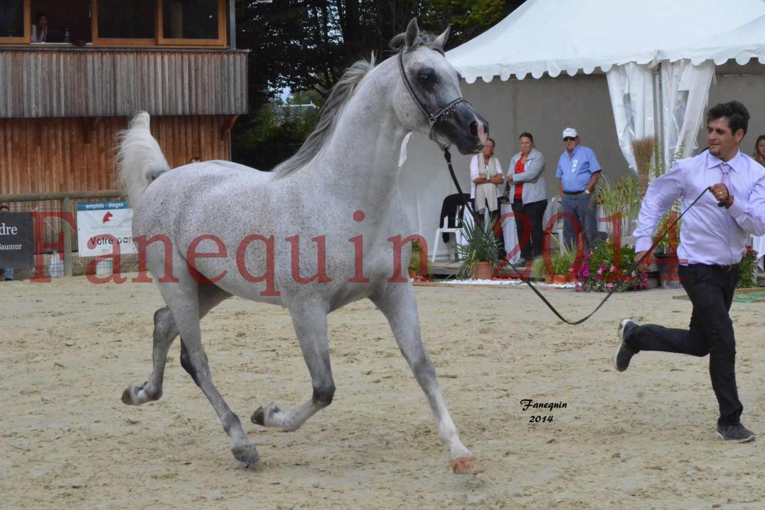 CHAMPIONNAT DE FRANCE  2014 A POMPADOUR - Notre Sélection - SHEYK DE GARGASSAN - 11