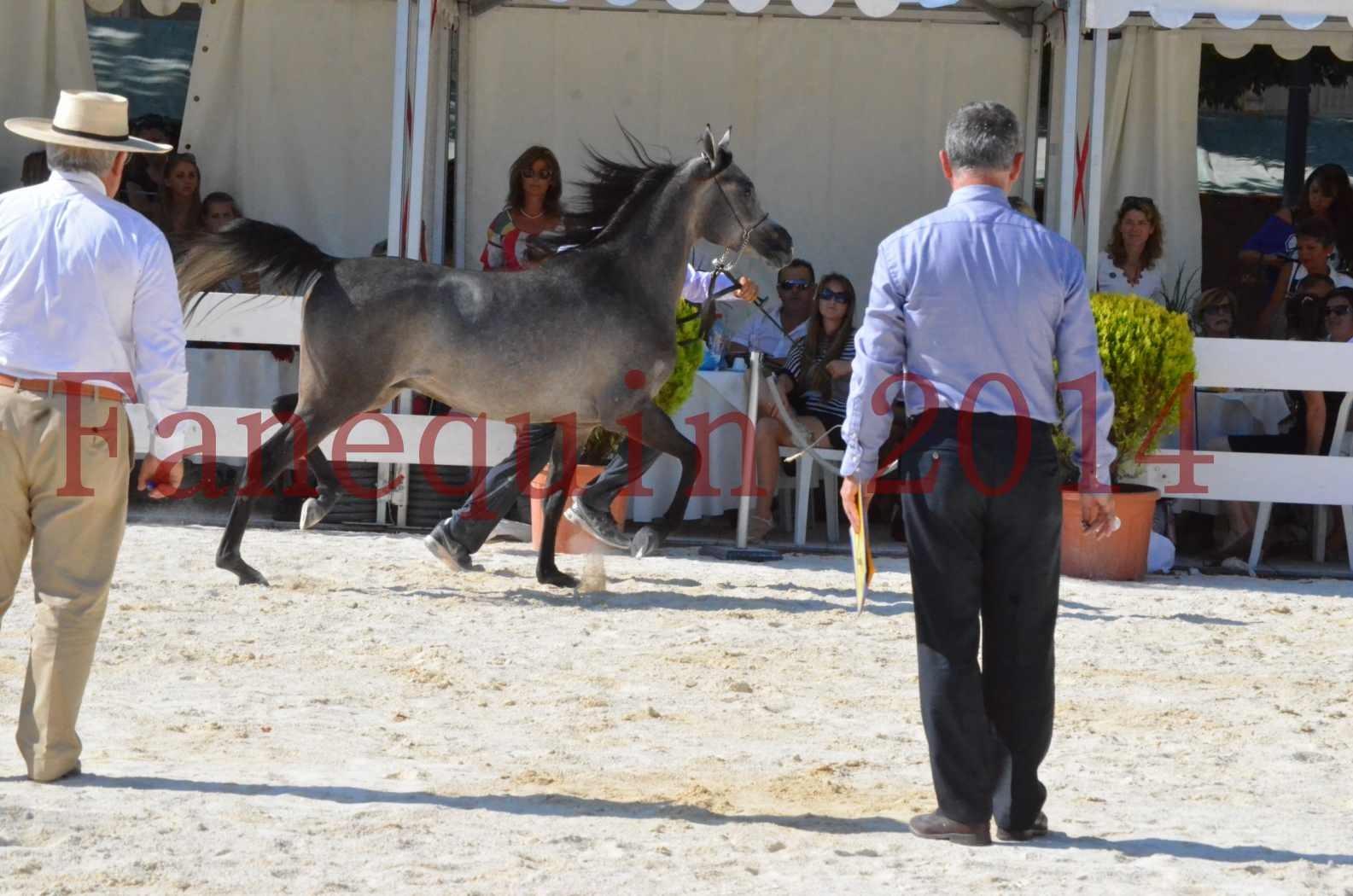 Concours National de Nîmes de chevaux ARABES 2014 - Championnat - JOSEPH'S BOUZIOLS - C 10