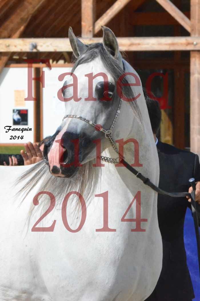 CHAMPIONNAT DE FRANCE  2014 A POMPADOUR - Notre Sélection - Portraits - SHAOLIN DE NEDJAIA - 08