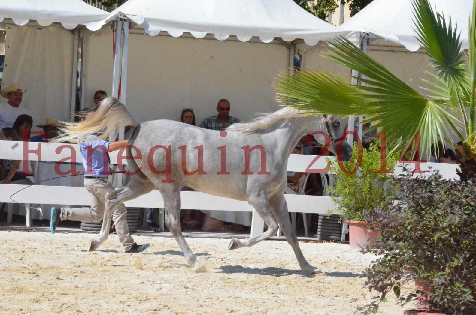 Concours national de Nîmes 2014 - Championnat Femelles Juniors - VOLODIA DE LAFON - 06