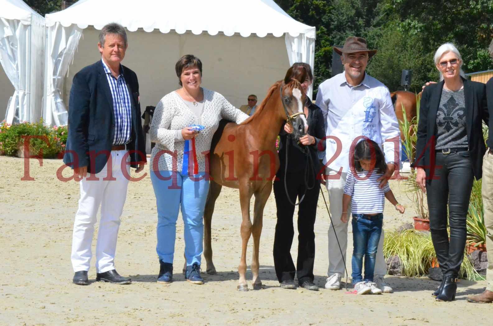 CHAMPIONNAT DE FRANCE 2014 A POMPADOUR - Championnat - TSAR KENZA - 97