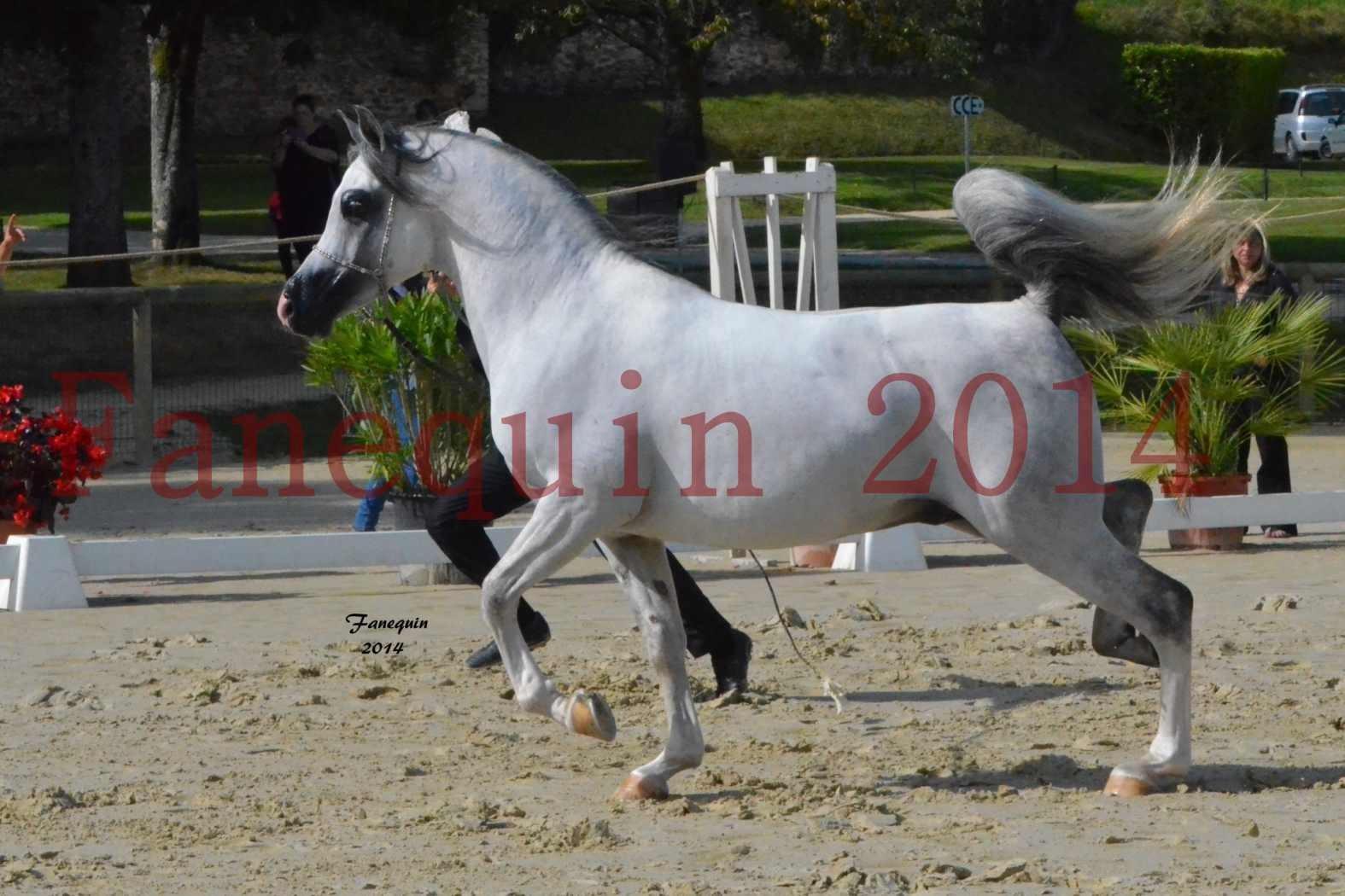 CHAMPIONNAT DE FRANCE  2014 A POMPADOUR - Notre Sélection - SHAOLIN DE NEDJAIA - 04