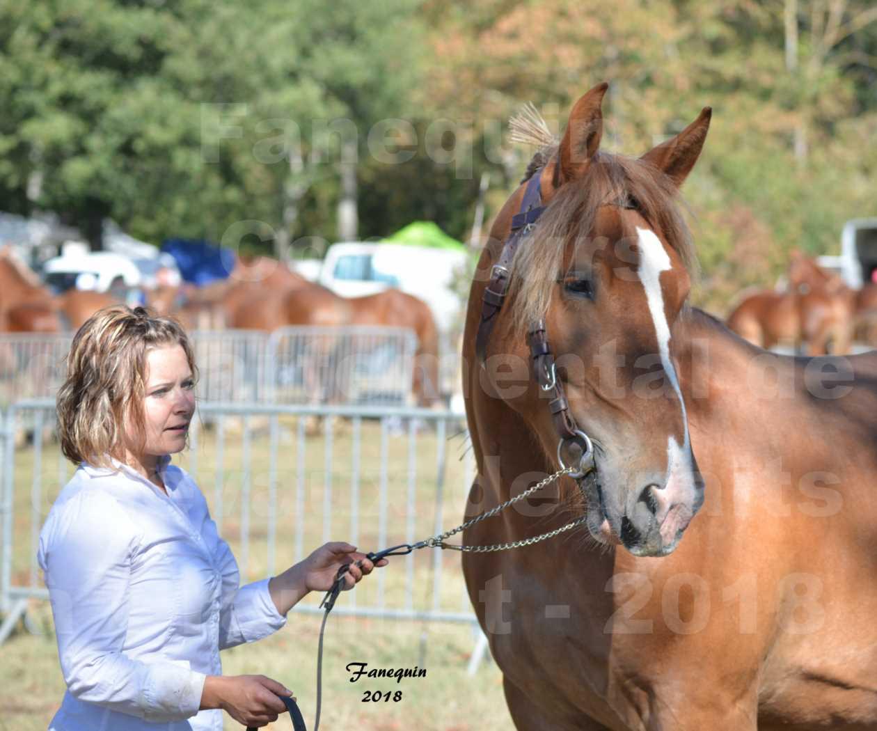 Concours départemental de chevaux de traits à GRAULHET en 2018 - Marjorie DEFRANCE - Notre Sélection - Portraits - 2