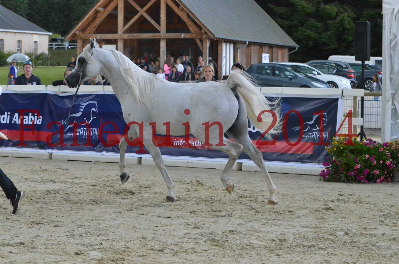CHAMPIONNAT DE FRANCE 2014 A POMPADOUR - Sélection - FA STARLIGHT - 11