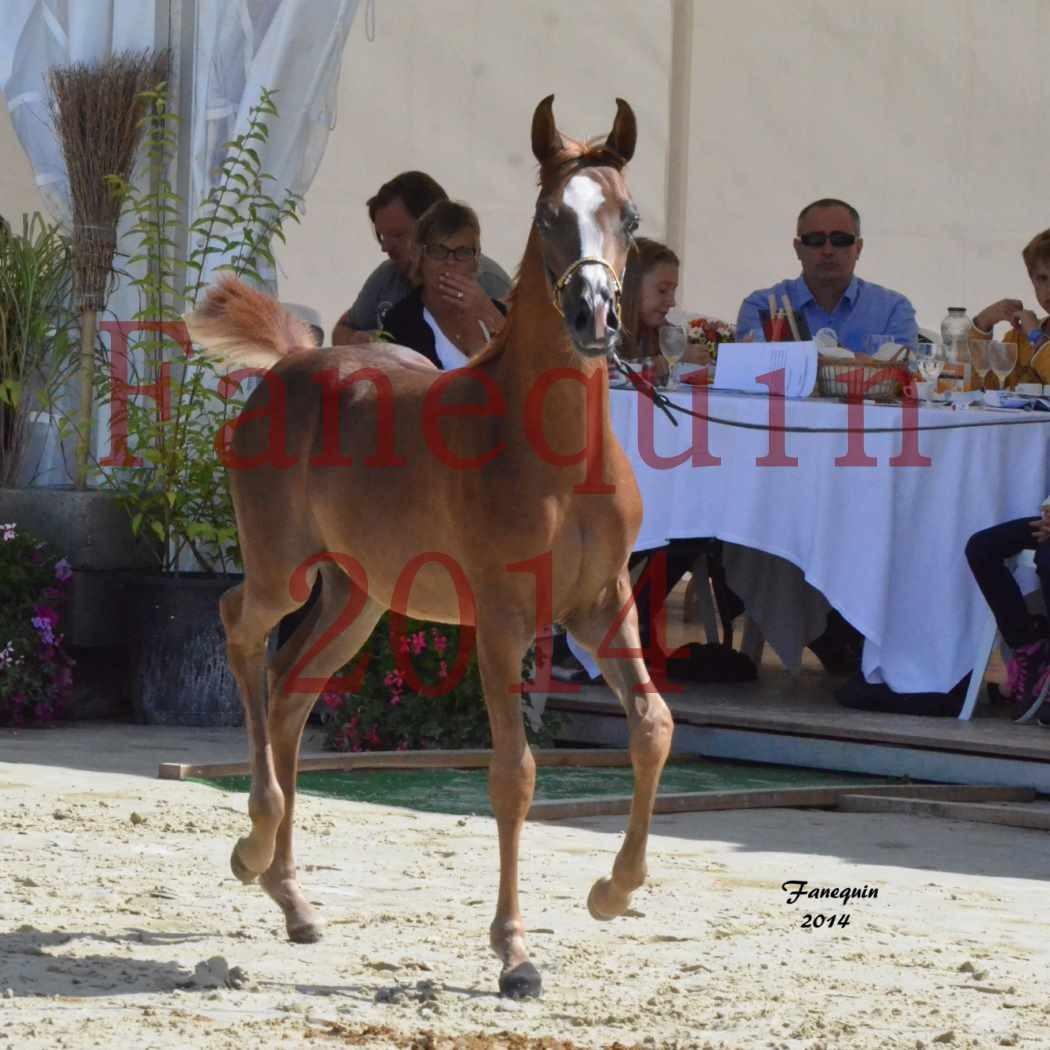 CHAMPIONNAT DE FRANCE 2014 A POMPADOUR - Notre Sélection - TSAR KENZA - 14