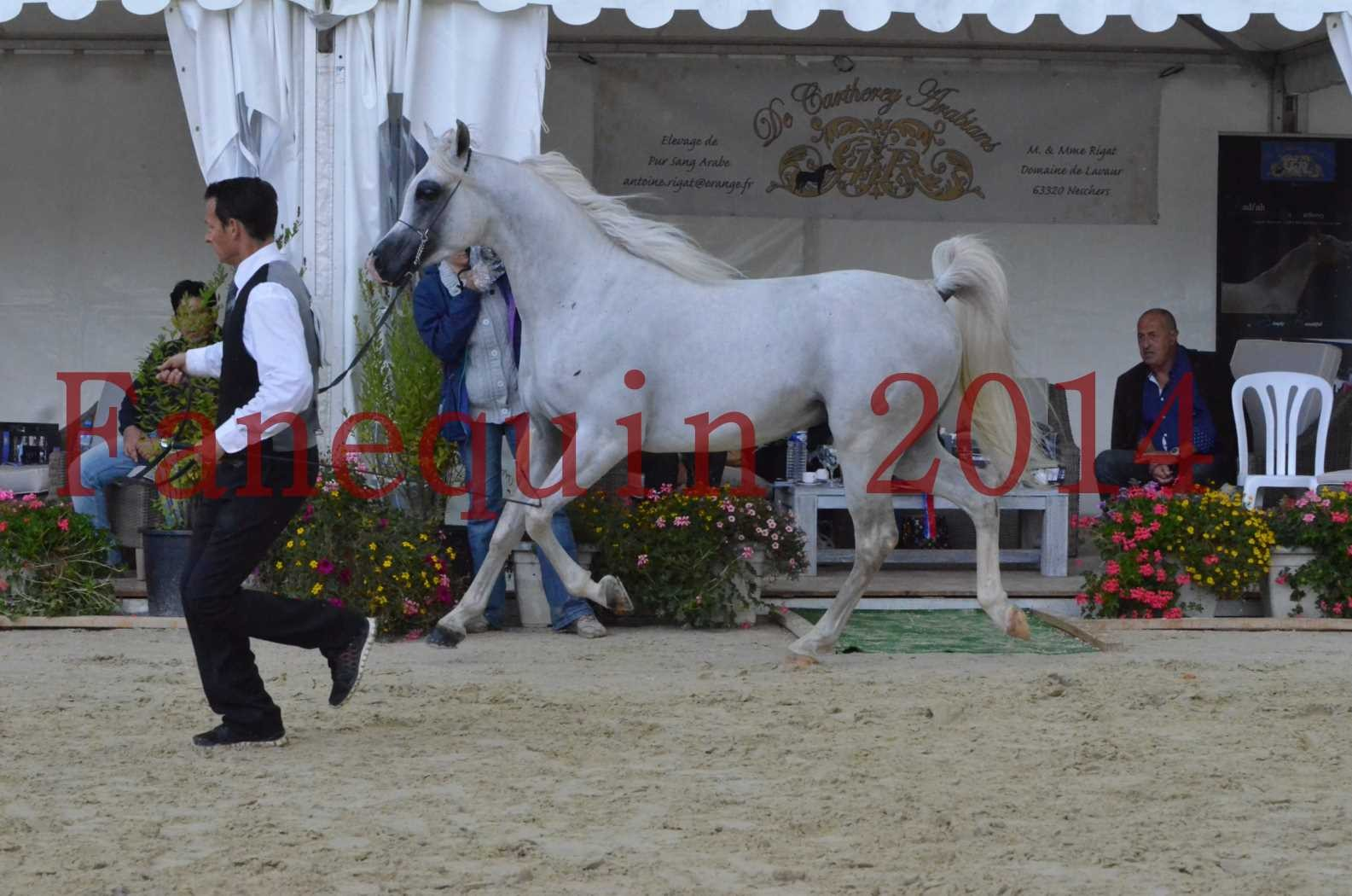 CHAMPIONNAT DE FRANCE 2014 A POMPADOUR - Sélection - FA STARLIGHT - 16