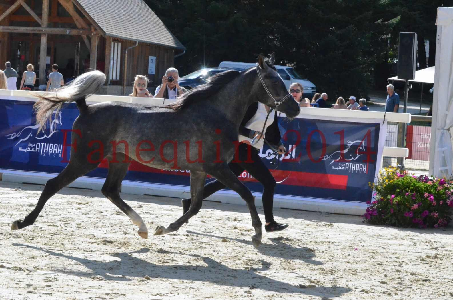 Championnat de FRANCE 2014 - Amateurs - CHTI KAID D'AUBIN - 31