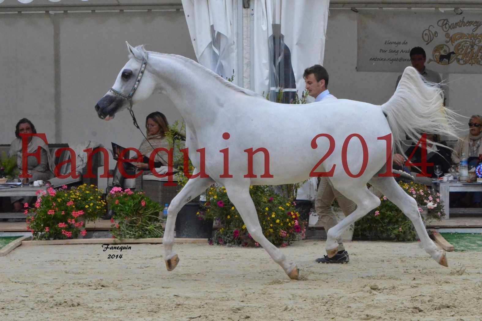 CHAMPIONNAT DE FRANCE 2014 A POMPADOUR - Notre Sélection - BLEUENN MILIN AVEL - 05