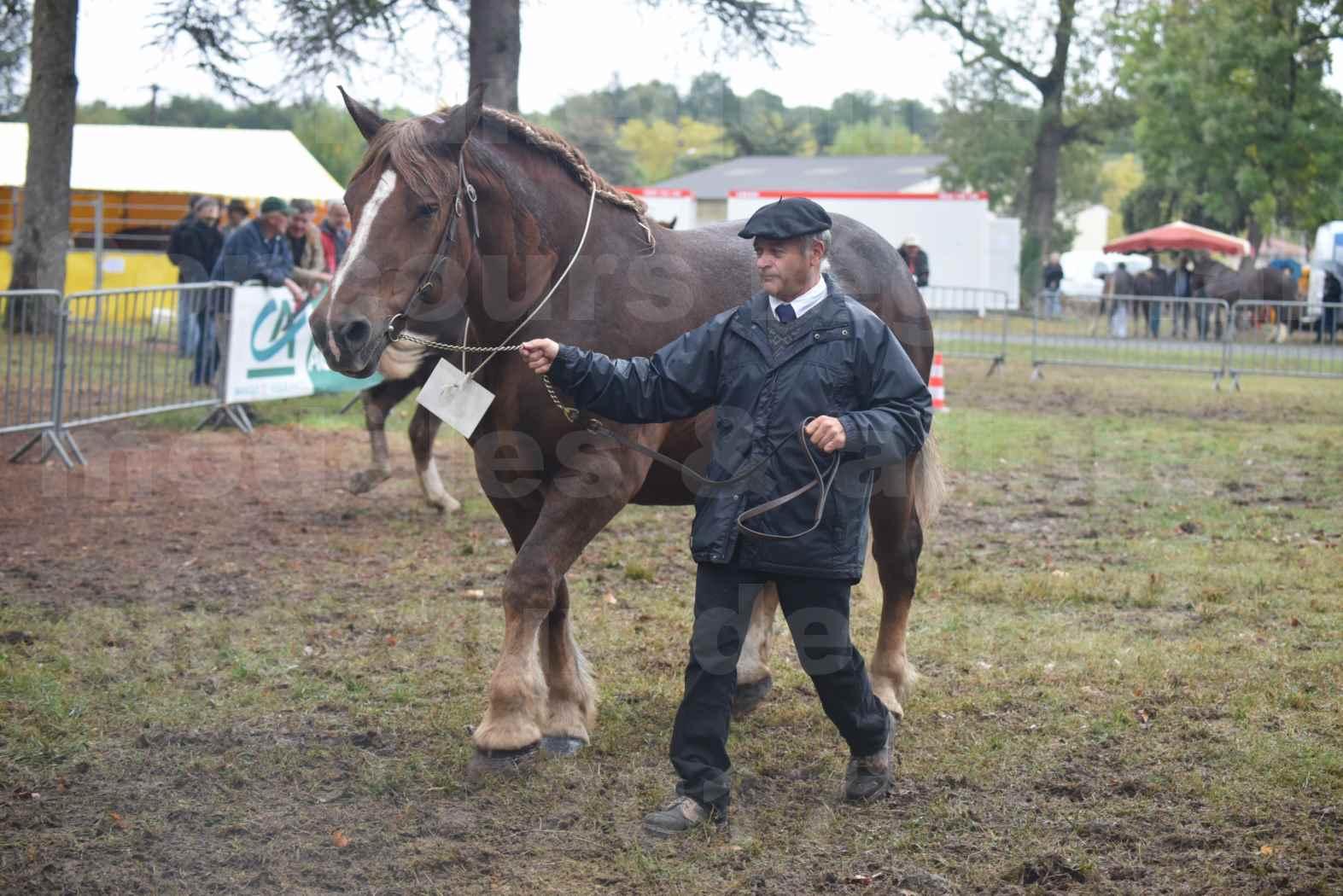 Concours Régional de chevaux de traits en 2017 - Jument Suitée - Trait BRETON - URIELLE DE LA MARGUE - 29