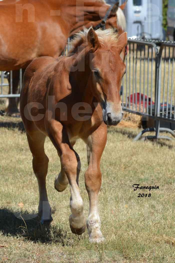 Fête du cheval à GRAULHET le 16 septembre 2018 - Concours Départemental de chevaux de traits - 49