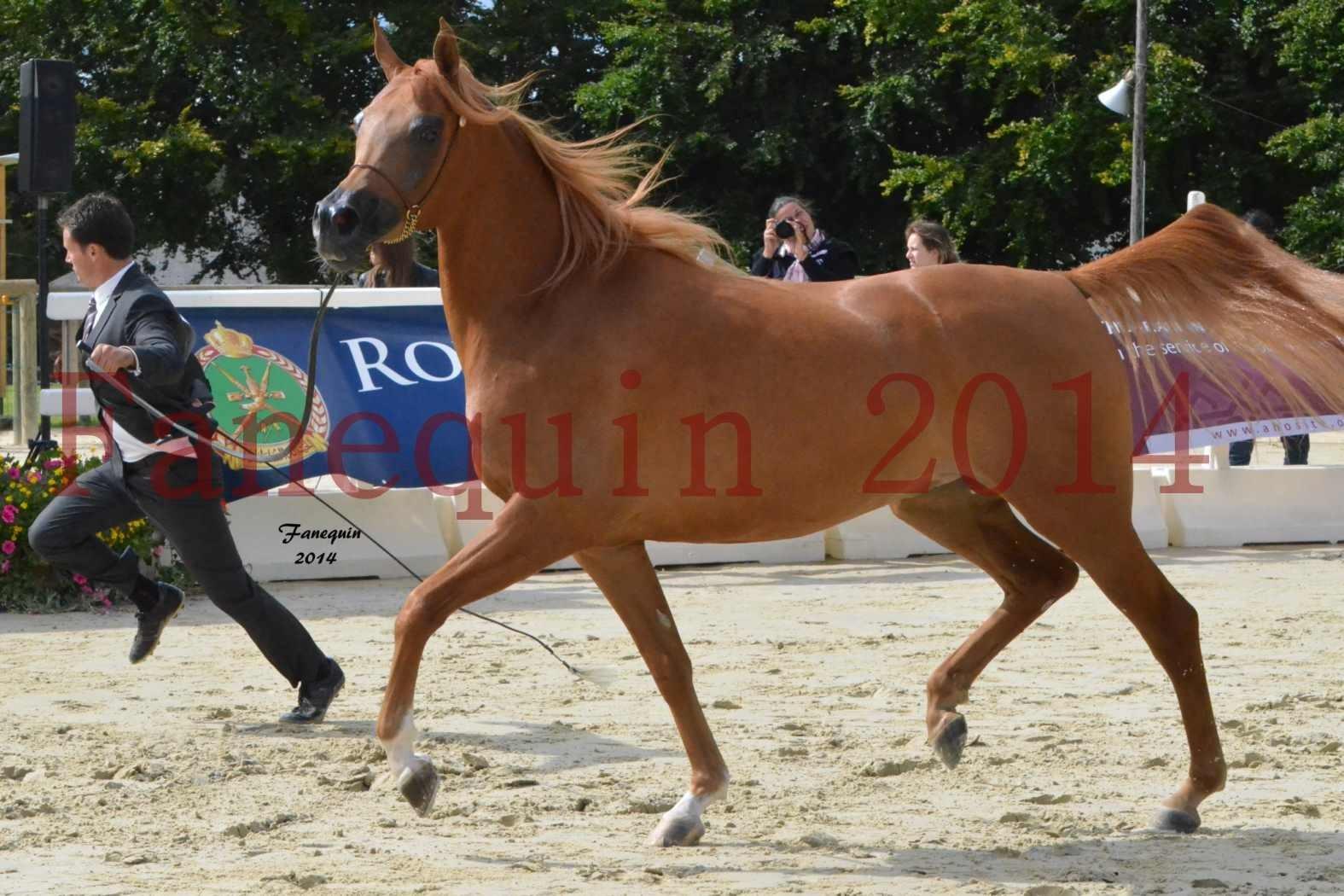 CHAMPIONNAT DE FRANCE 2014 A POMPADOUR - Notre Sélection - LUTFINAH JA - 19