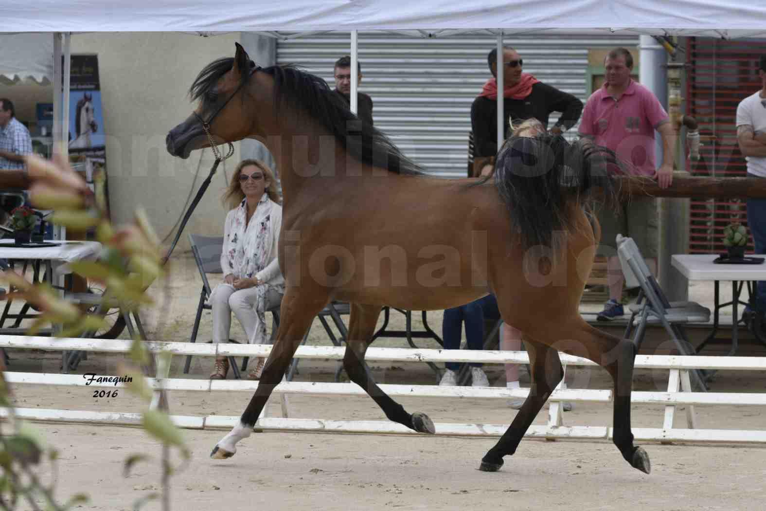 Show national de chevaux arabes de CHAZEY sur AIN - JAMEELAH AL ADEYAT - 2