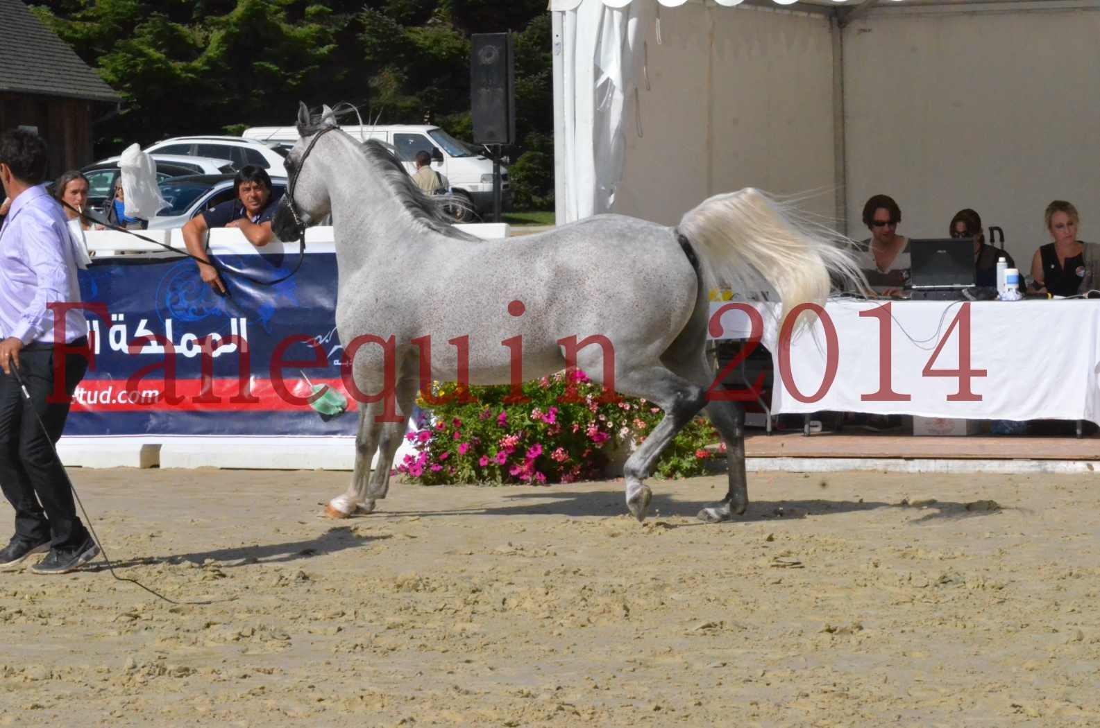 CHAMPIONNAT DE FRANCE  2014 A POMPADOUR - Sélection - SHEYK DE GARGASSAN - 11