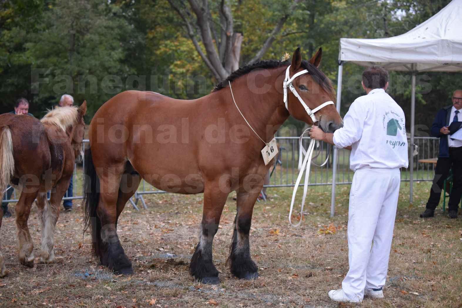Concours Régional de chevaux de traits en 2017 - Jument & Poulain Trait COMTOIS - COMETE DE GRILLOLES - 07