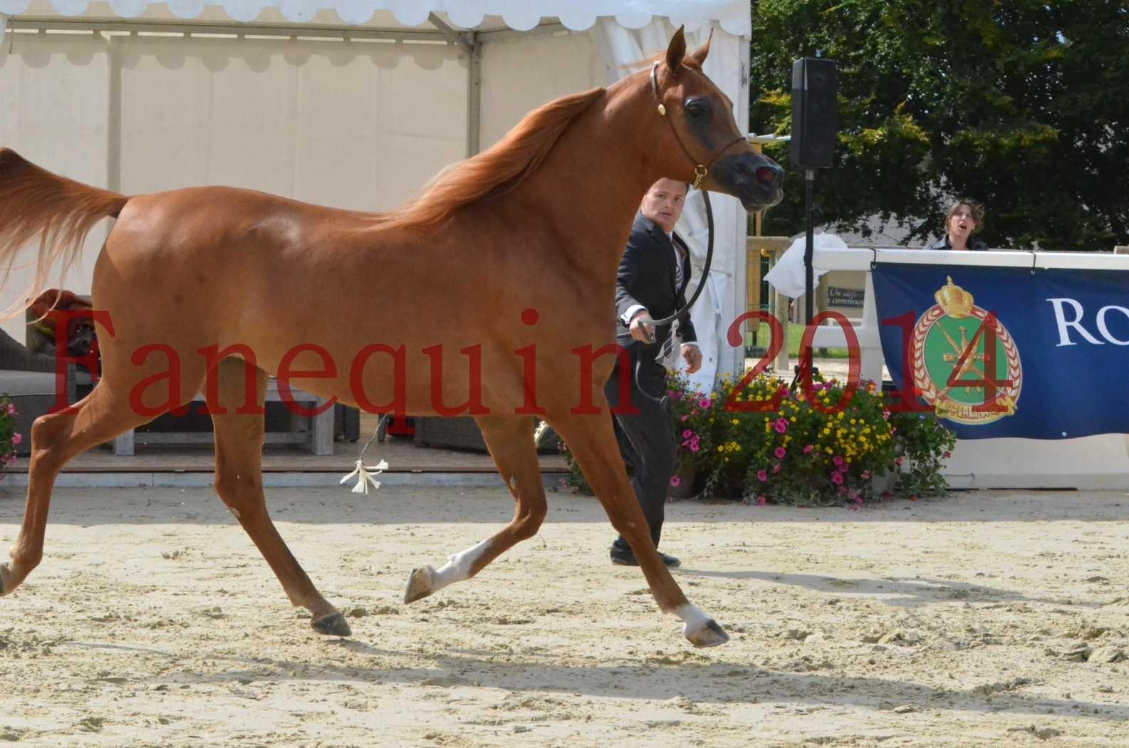 CHAMPIONNAT DE FRANCE 2014 A POMPADOUR - Sélection - LUTFINAH JA - 33