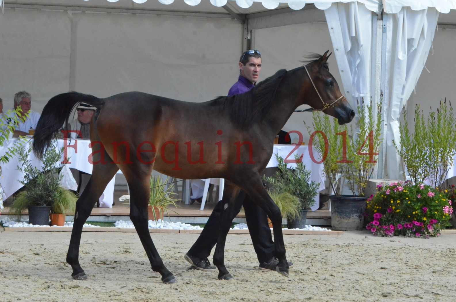 Championnat de FRANCE 2014 - Amateurs - SH FARAJAA - 11