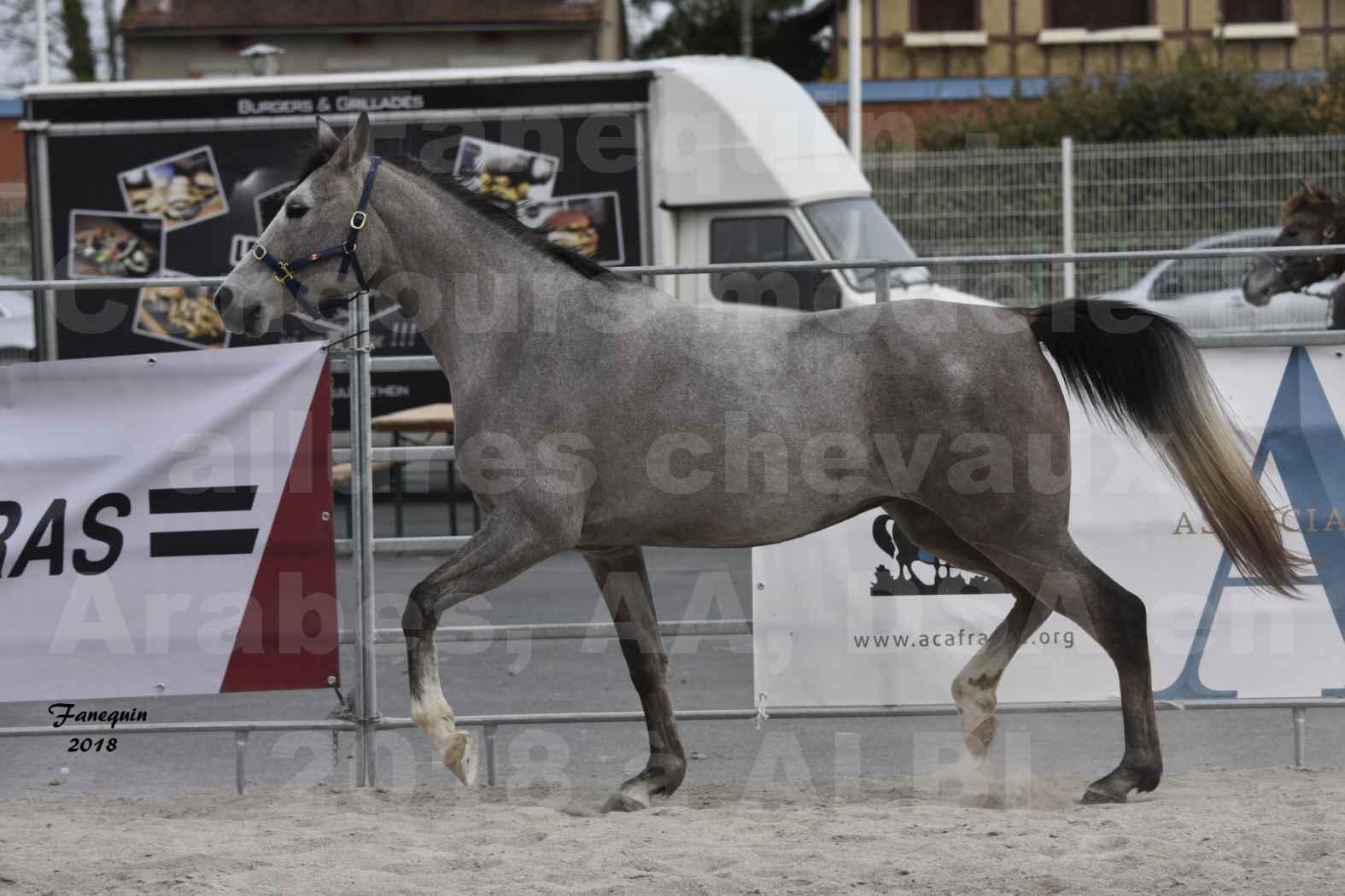 Concours d'élevage de Chevaux Arabes - D. S. A. - A. A. - ALBI les 6 & 7 Avril 2018 - FESIHAMKA ARTAGNAN - Notre Sélection - 2