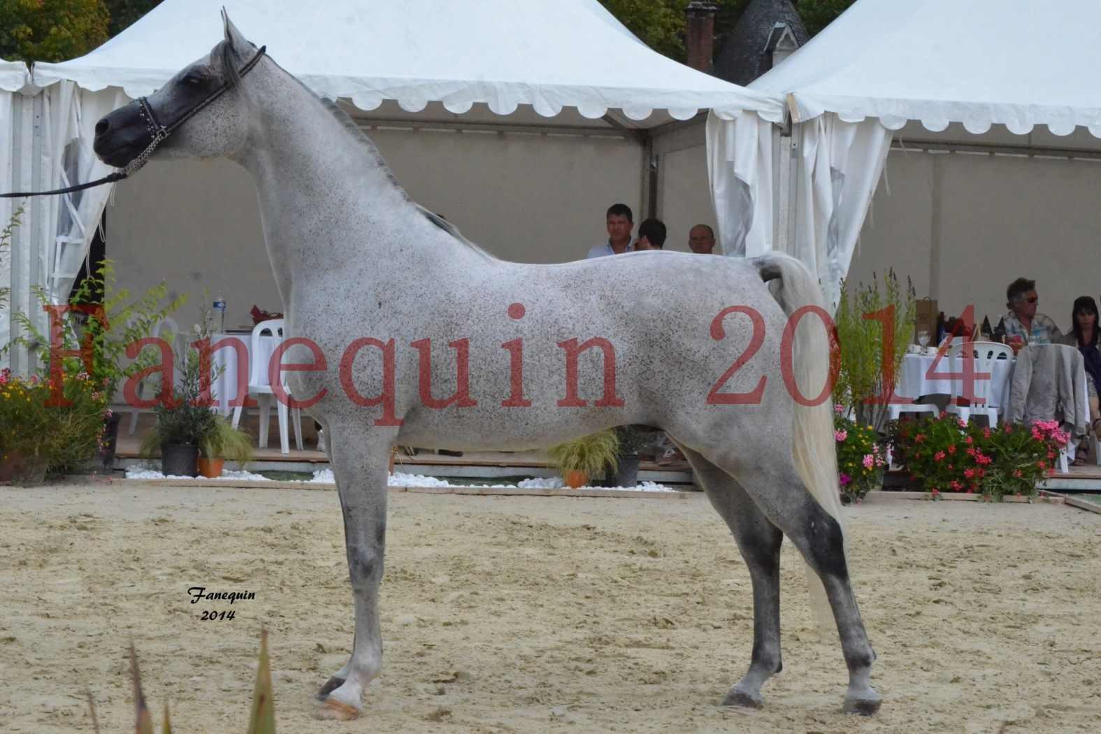 CHAMPIONNAT DE FRANCE  2014 A POMPADOUR - Notre Sélection - SHEYK DE GARGASSAN - 14