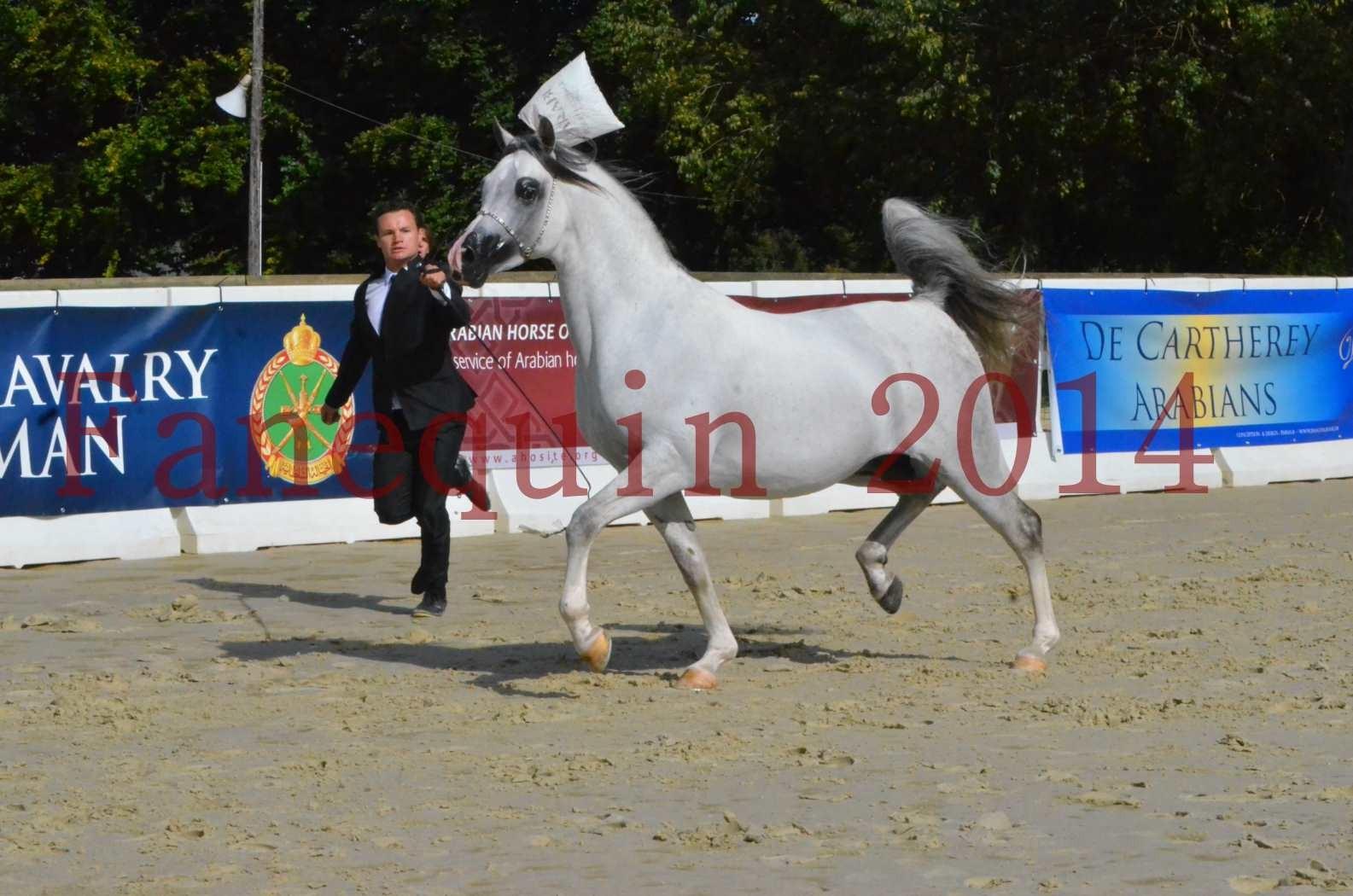 CHAMPIONNAT DE FRANCE  2014 A POMPADOUR - Sélection - SHAOLIN DE NEDJAIA - 19
