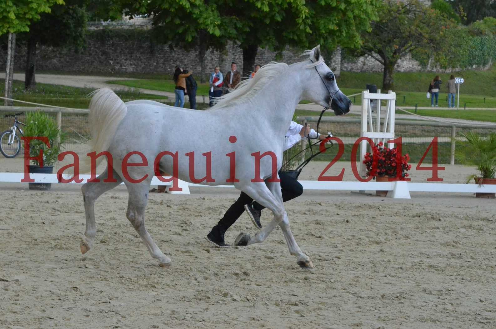 CHAMPIONNAT DE FRANCE 2014 A POMPADOUR - Sélection - FA STARLIGHT - 06