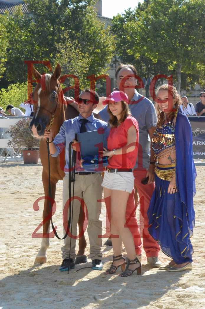 Concours National de Nîmes de chevaux ARABES 2014 - Championnat - MASSAI DE BARREL - 03