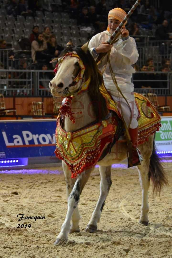 Show des races - Chevaux BARBE 26