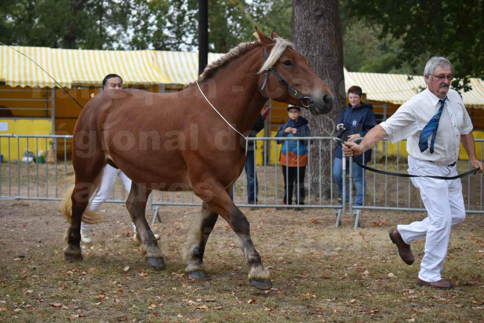 Concours Régional de chevaux de traits en 2017 - Pouliche Trait COMTOIS - DUCHESSE DE BENS - 16