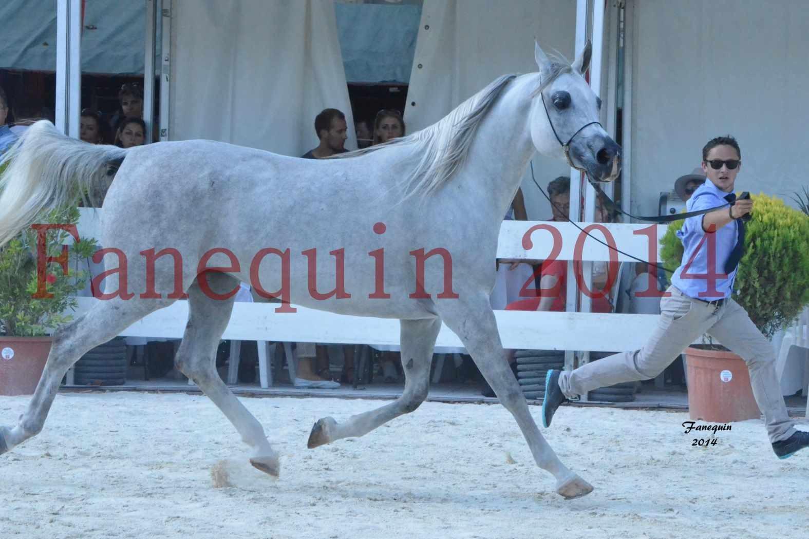 Concours National de Nîmes de chevaux ARABES 2014 - Notre Sélection - ELLESTERA - 03