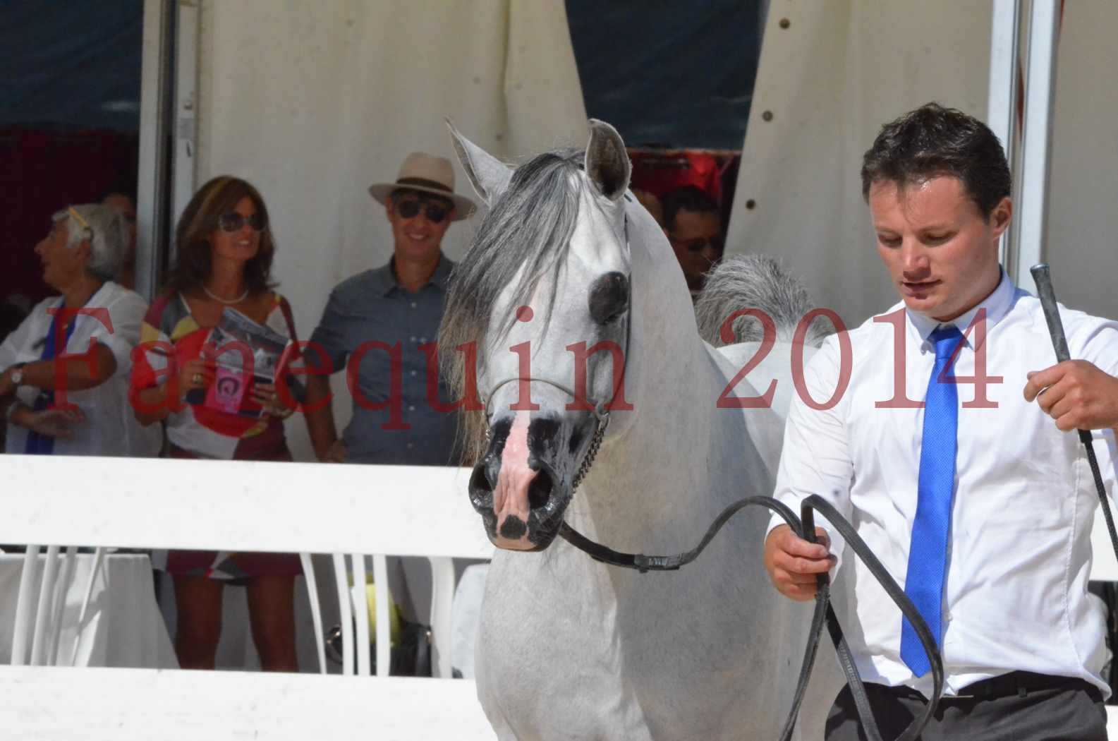 Concours National de Nîmes de chevaux ARABES 2014 - Sélection - SHAOLIN DE NEDJAIA - 74