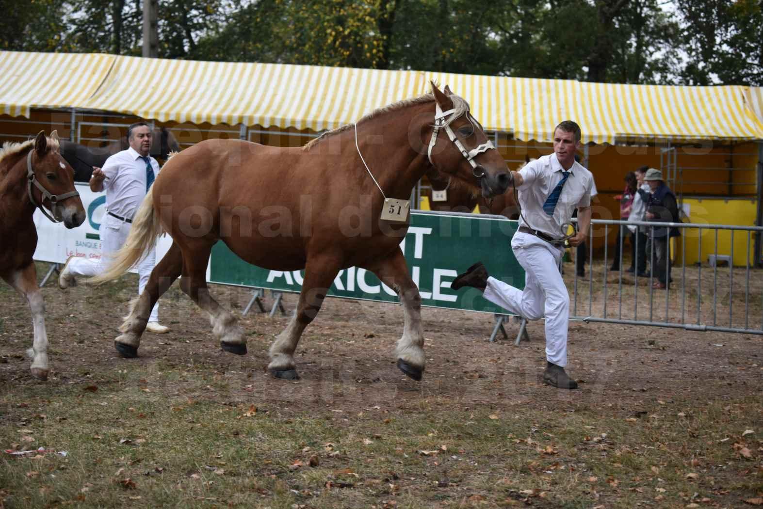 Concours Régional de chevaux de traits en 2017 - Jument & Poulain Trait COMTOIS - CANNELLE 9 - 17