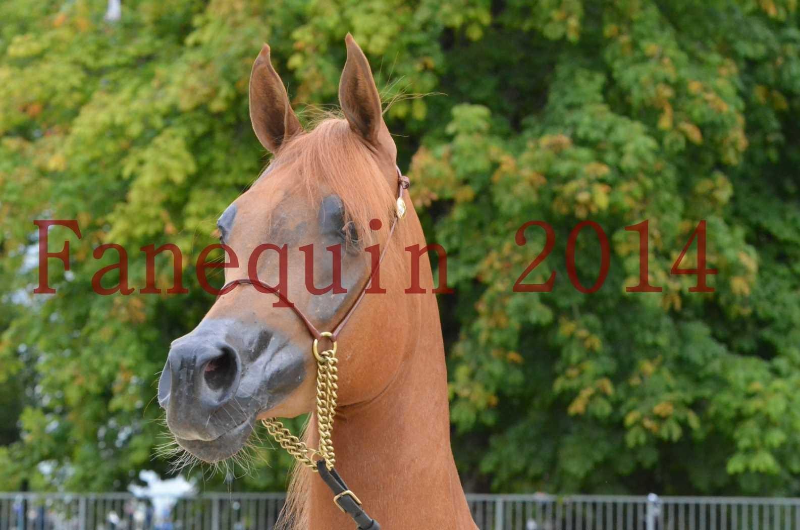 CHAMPIONNAT DE FRANCE 2014 A POMPADOUR - Sélection - LUTFINAH JA - 05