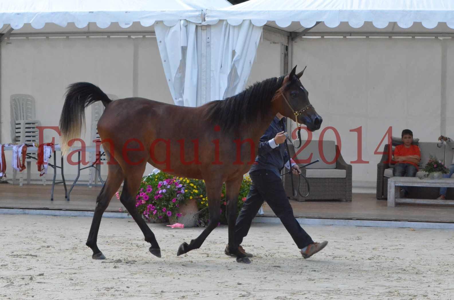 Championnat de FRANCE 2014 - Amateurs - KAL'ELLE D'ELHORIA - 30