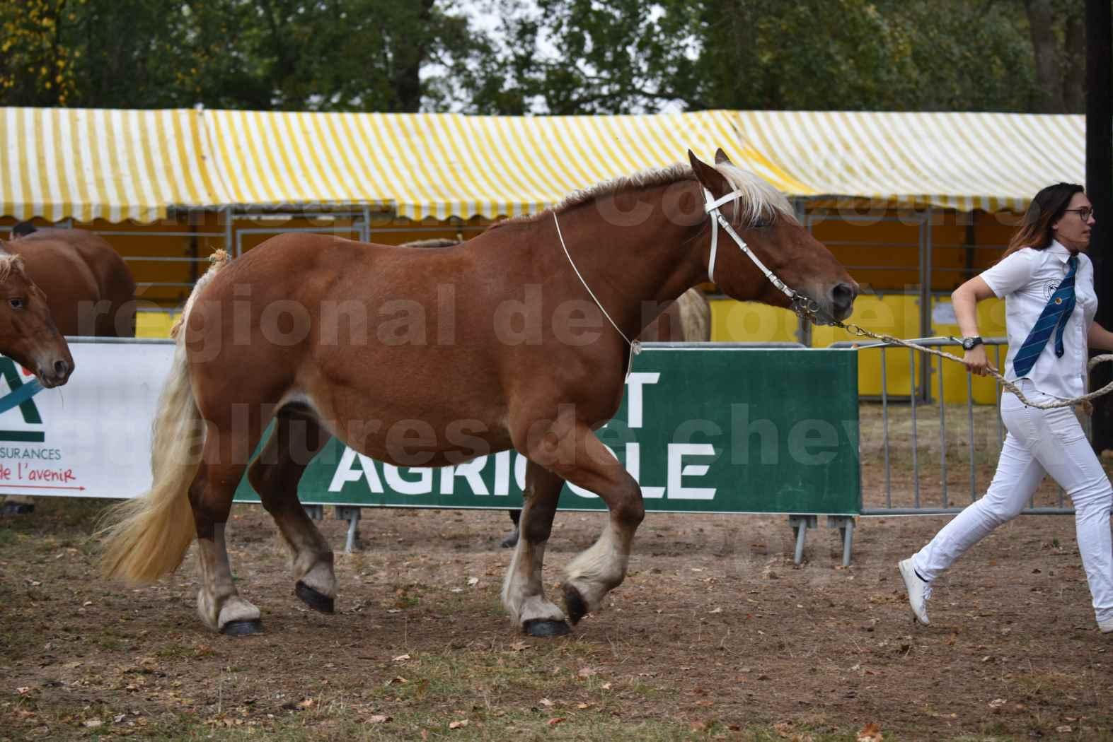 Concours Régional de chevaux de traits en 2017 - Jument & Poulain Trait COMTOIS - DAKOTA DU GARRIC - 02