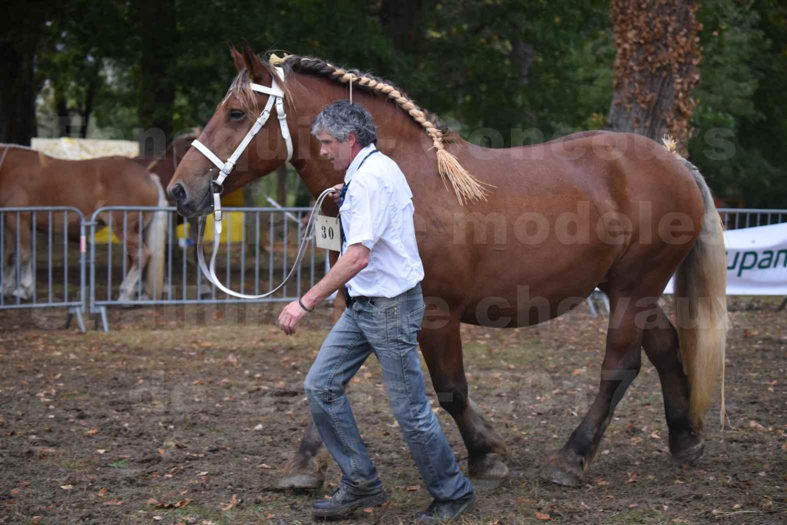 Concours Régional de chevaux de traits en 2017 - Trait COMTOIS - ESQUISSE DE VIELLE - 14