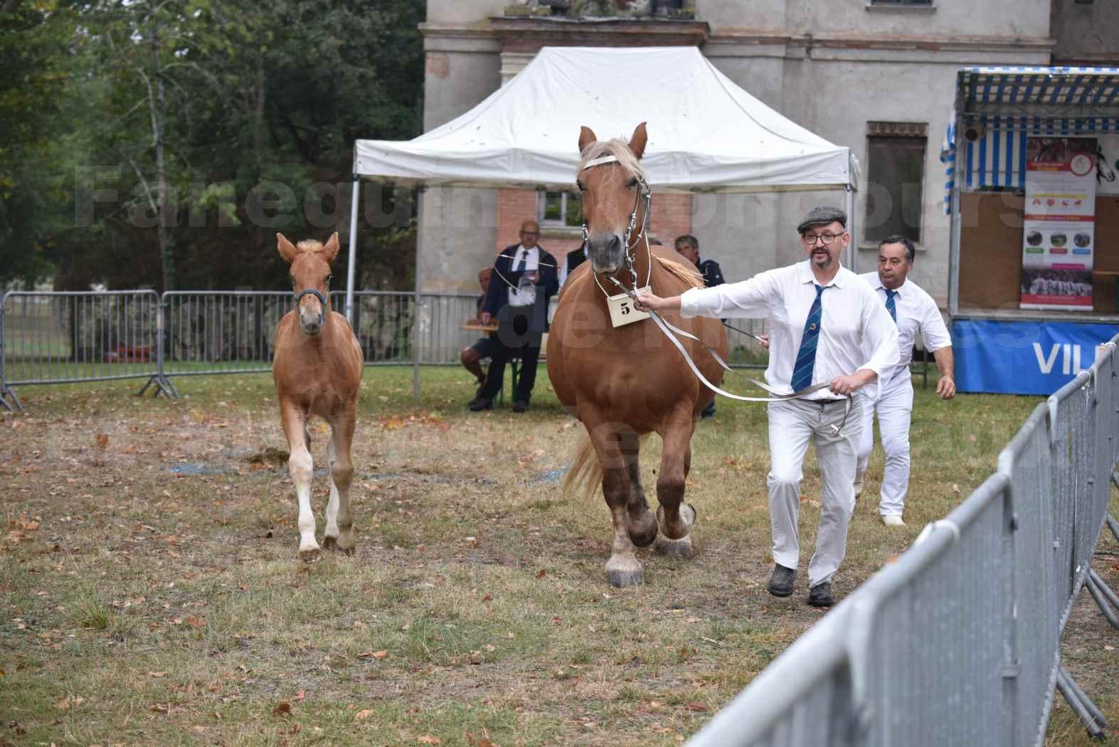 Concours Régional de chevaux de traits en 2017 - Jument & Poulain COMTOIS - ALLIANCE 3 - 15