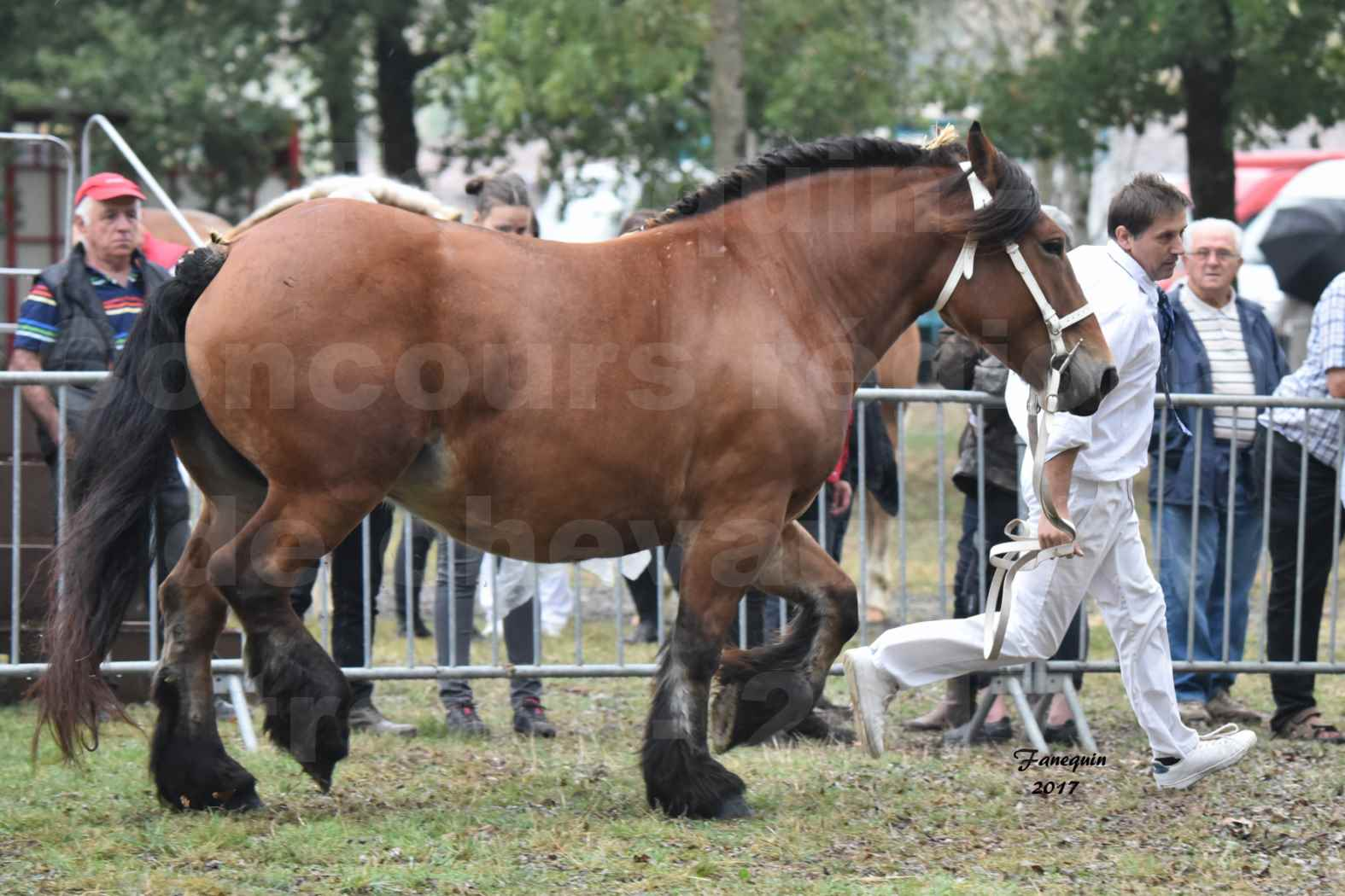Concours Régional de chevaux de traits en 2017 - Jument & Poulain Trait COMTOIS - COMETE DE GRILLOLES - 02