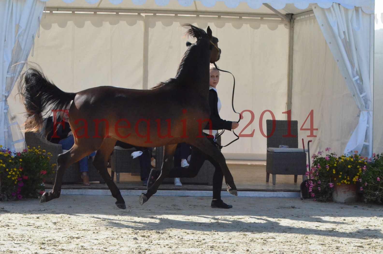 Championnat de FRANCE 2014 - Amateurs - JA KHALEB - 20