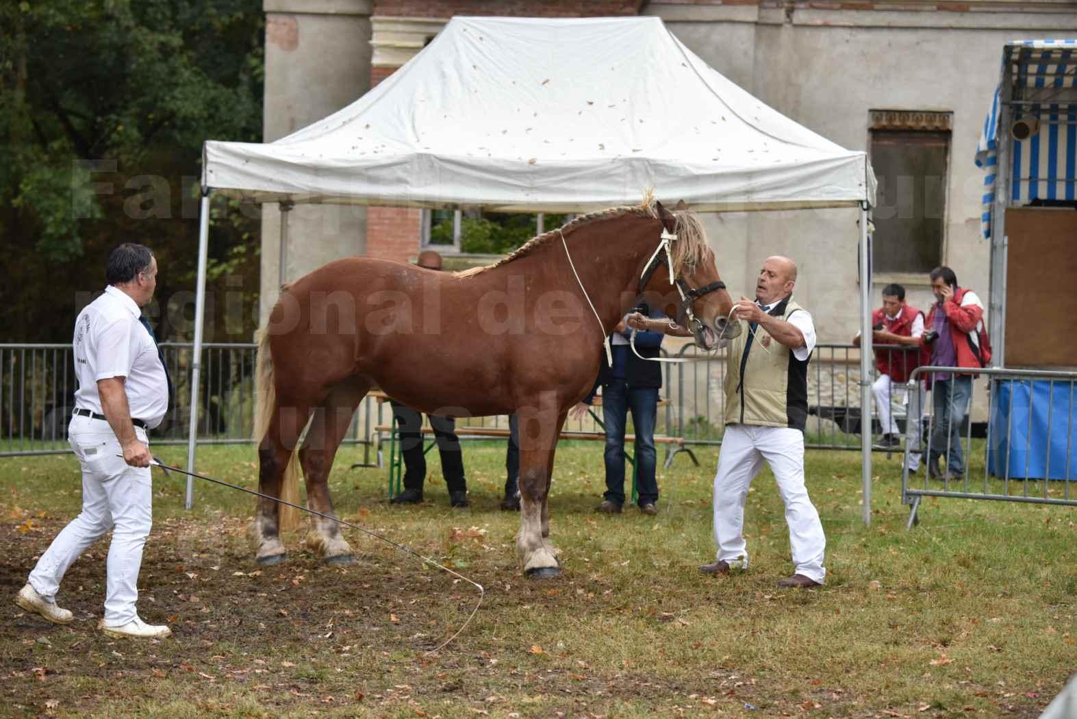 Concours Régional de chevaux de traits en 2017 - Trait COMTOIS - ERANIE DES RAYNAUDS - 01