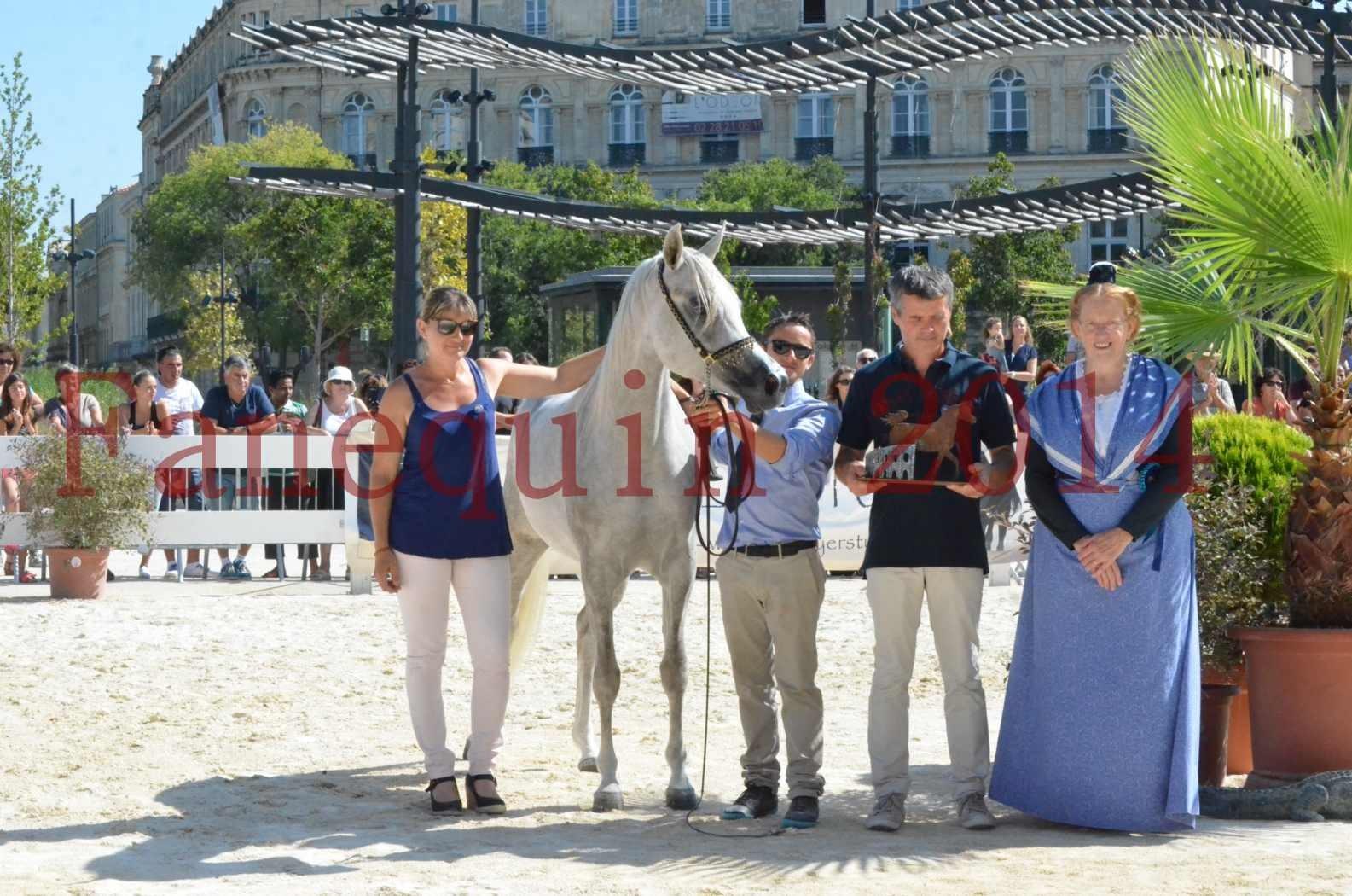 Concours national de Nîmes 2014 - Championnat Femelles Juniors - VOLODIA DE LAFON - 26