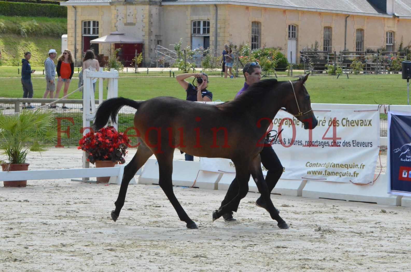 Championnat de FRANCE 2014 - Amateurs - SH FARAJAA - 14