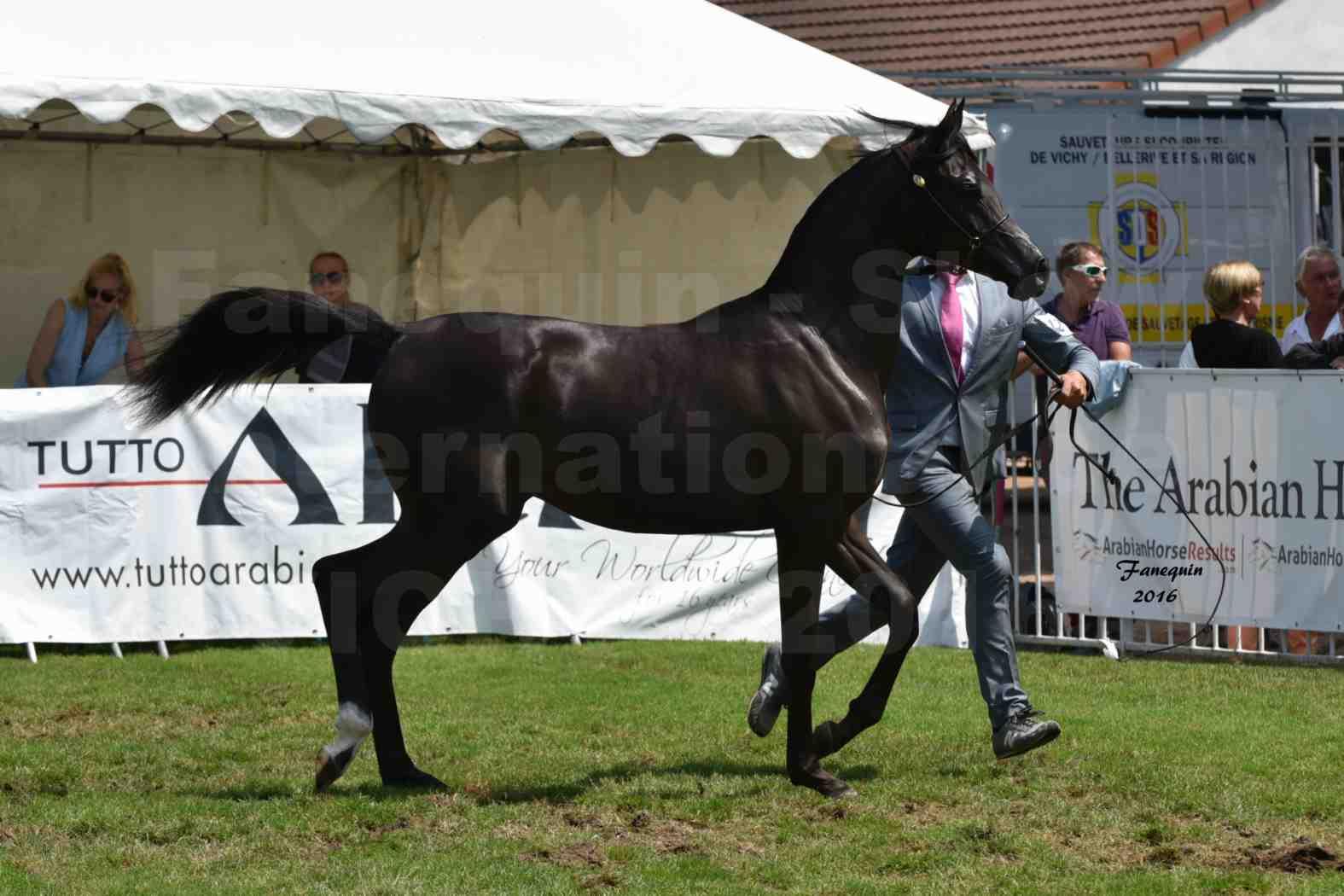 International Arabian Horse Show B de VICHY 2016 - ANNALISA ALIH - Notre Sélection - 1