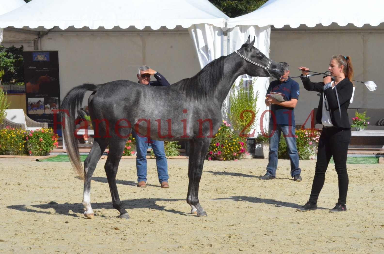 Championnat de FRANCE 2014 - Amateurs - CHTI KAID D'AUBIN - 44