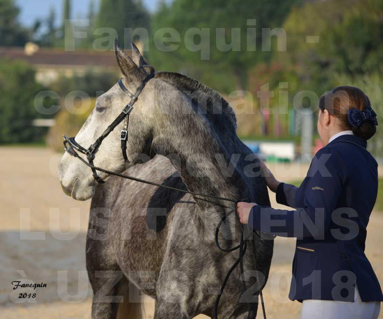 Confirmation de chevaux LUSITANIENS aux Haras d'UZES Novembre 2018 - DALIA DU CLOS - Portraits - 1