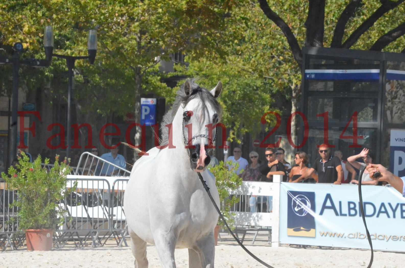 Concours National de Nîmes de chevaux ARABES 2014 - Championnat - SHAOLIN DE NEDJAIA - 25