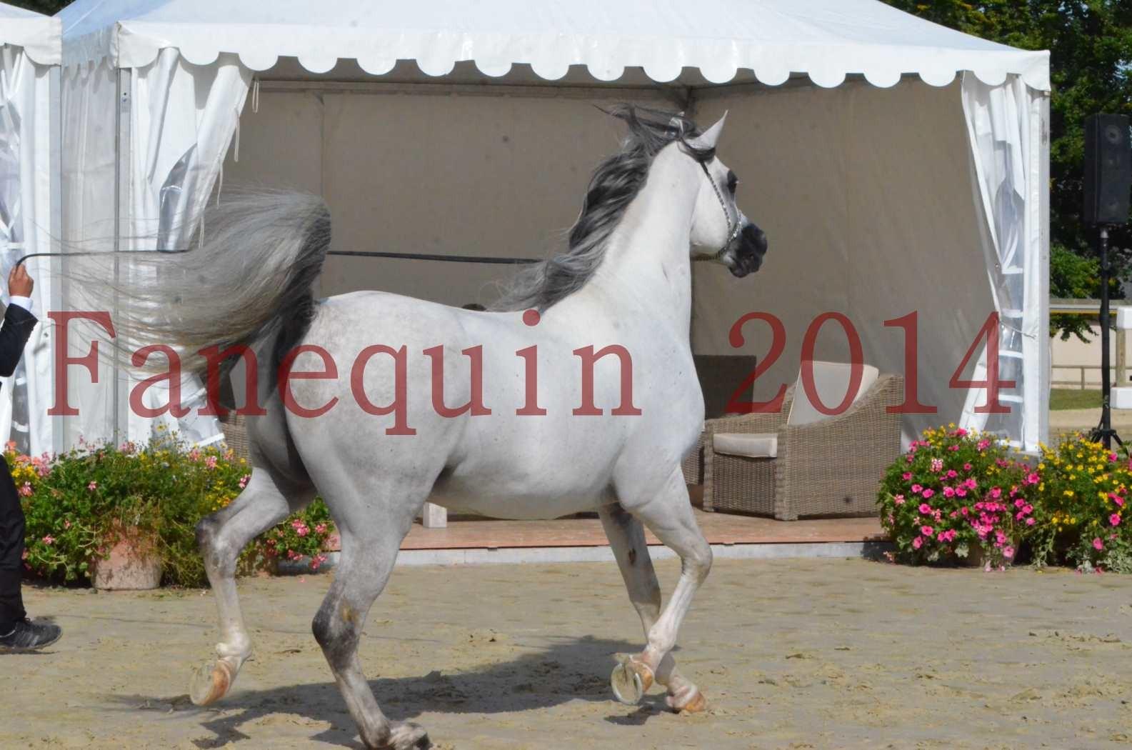 CHAMPIONNAT DE FRANCE  2014 A POMPADOUR - Sélection - SHAOLIN DE NEDJAIA - 11